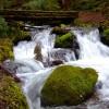 apts seattle: creek
