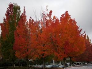 apts seattle: seattle trees