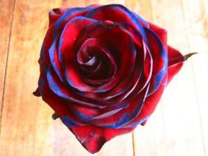 apts seattle: rose1