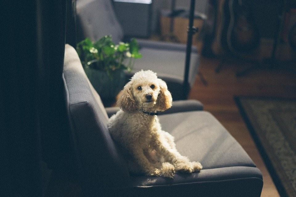 Dog, Pet, Animal, Canine, Cute, Mammal, Fur, Sitting